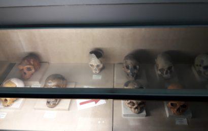 Itenerary Wisata Pendidikan Museum Geologi Bandung Jabar